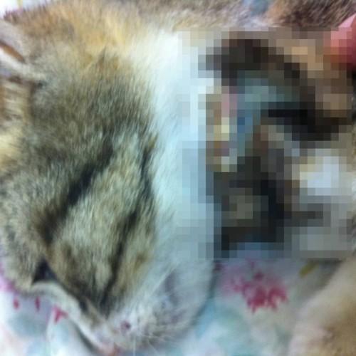 חתולה עם קולר שחנק אותה