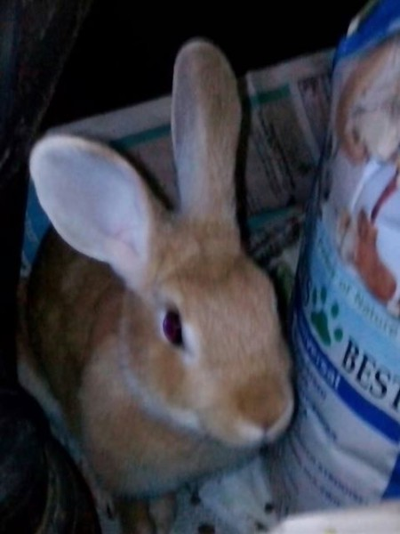 rabbit-found
