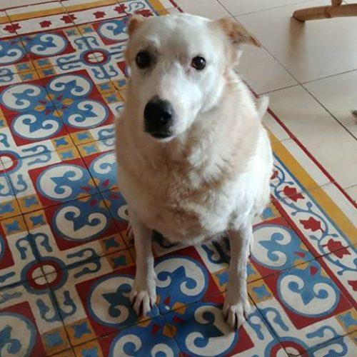 בין כל הכלבים בבית המחסה טאטו זקוקה לבית יותר מכולם