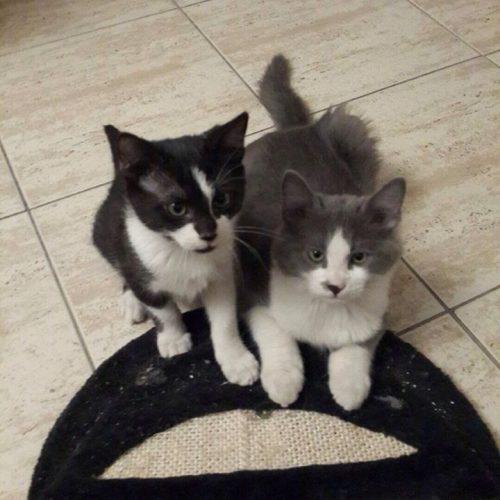 גור חתולים מעליית הגג