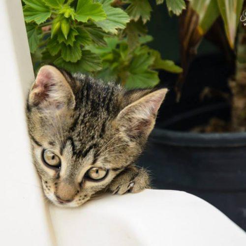 חתולים מצטלמים -אפריל