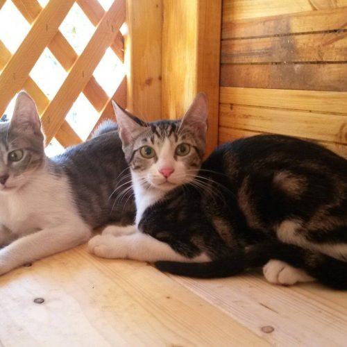 בית חדש לחתולים