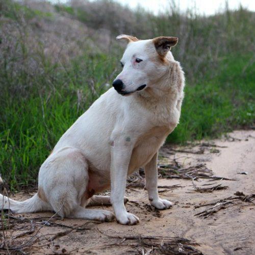 הכלבים מטיולים ארוך בשדות