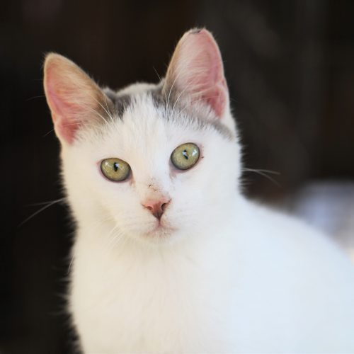 Penka – Pet of the day