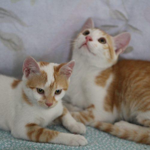 טום וג'רי